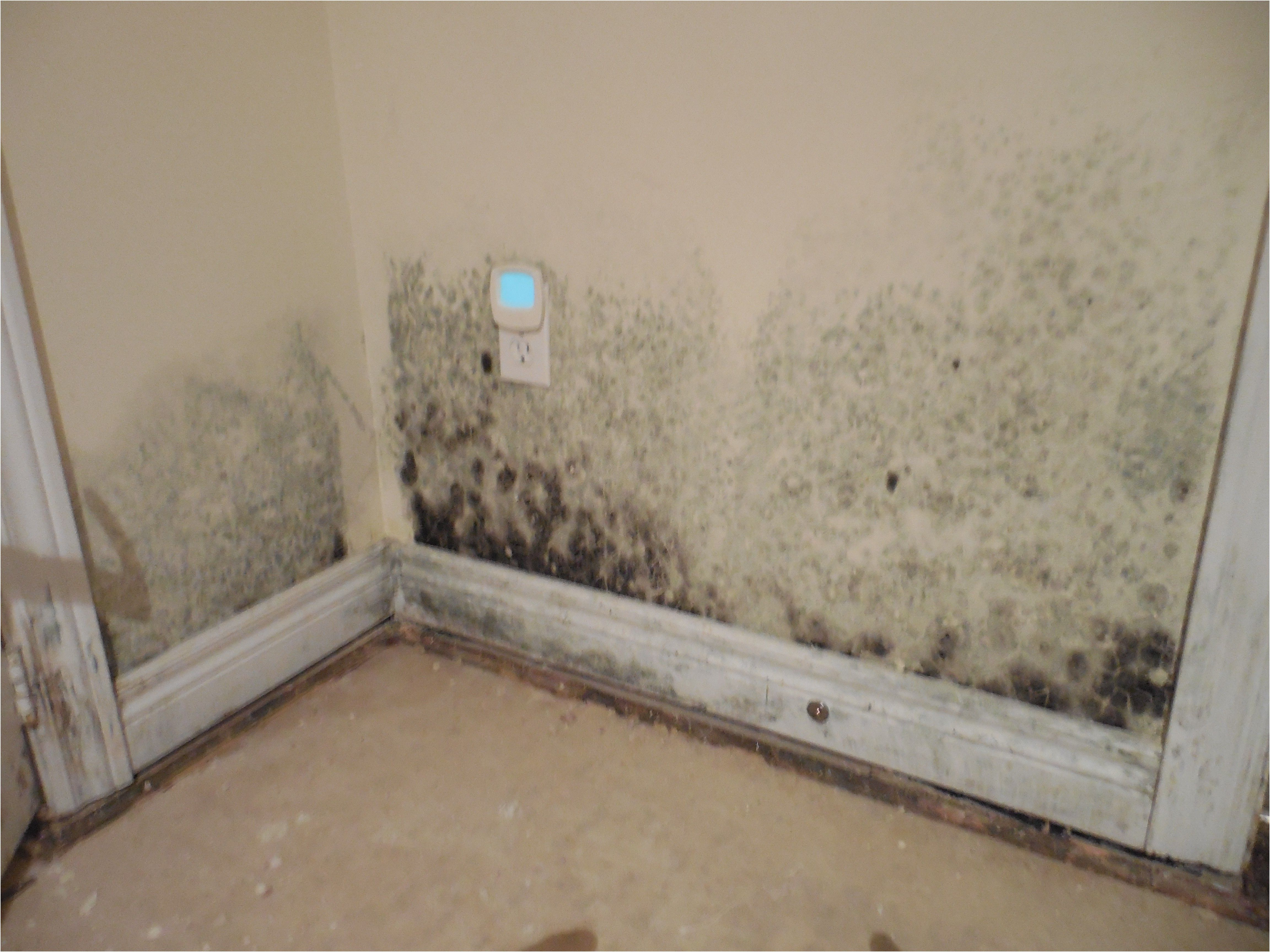 Black Mould In Basement Part - 37: Expert Mold Remediation In Oakville And Mississauga From What Causes Mold  In Basement