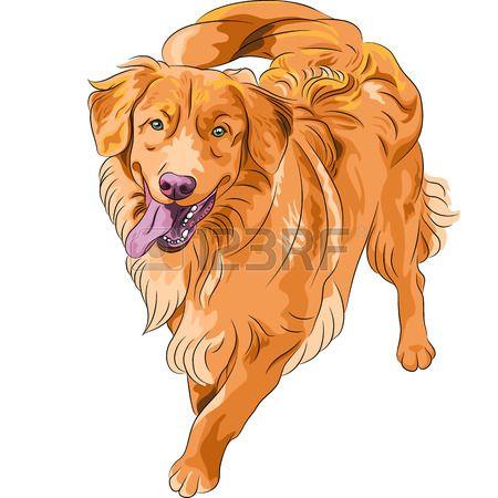Stock Vector Schnauzer Breed Dog Breeds Toller Dog