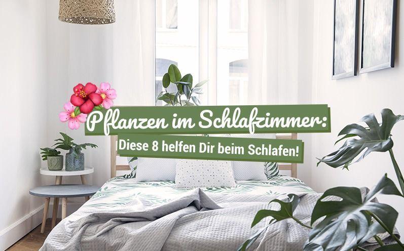 Pflanzen im Schlafzimmer: Diese 8 helfen beim Schlafen! #pflanzenimschlafzimmer Pflanzen im Schlafzimmer: Diese 8 helfen beim Schlafen! #pflanzenimschlafzimmer Pflanzen im Schlafzimmer: Diese 8 helfen beim Schlafen! #pflanzenimschlafzimmer Pflanzen im Schlafzimmer: Diese 8 helfen beim Schlafen! #pflanzenimschlafzimmer