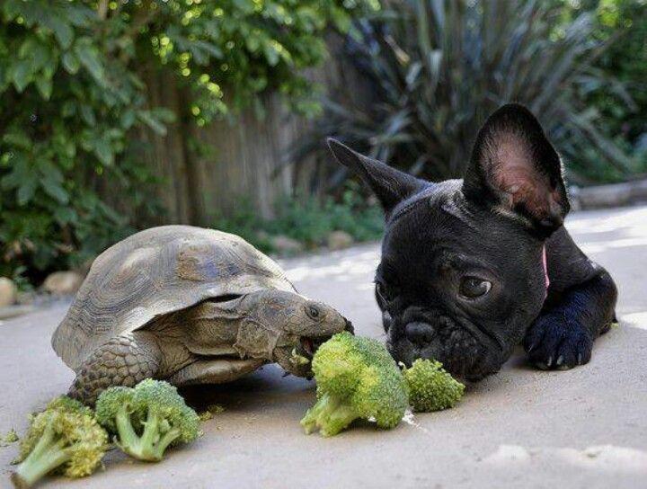 Facciamo Che I Broccoli Te Li Mangi Tu E Io Mi Vado A Cercare Delle Crocchette Ok Cute Animals Pets Animals