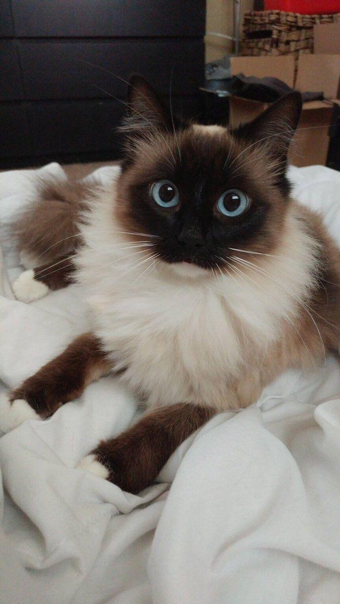 #Cats  #Cat  #Kittens  #Kitten  #Kitty  #Pets  #Pet  #Meow  #Moe  #CuteCats  #CuteCat #CuteKittens #CuteKitten #MeowMoe      Frank Sinatra eyes ...   https://www.meowmoe.com/36882/