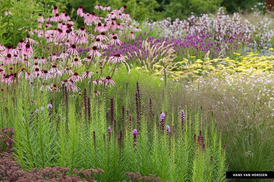 Liatris echinacea sedum und gr ser garteninspirationen for Pflanzengestaltung garten