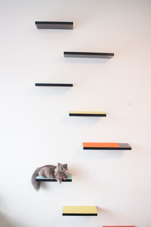how to build cat shelves that your cat will love pinterest rh pinterest com make your own floating cat shelves make cat climbing shelves