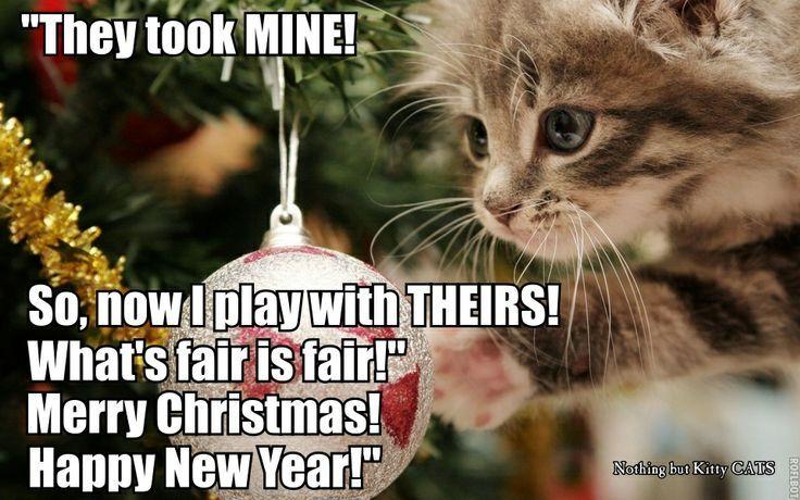 Funny Merry Christmas Meme : Cat a logs cat giggl christmas memes christmas pet christmas kitty