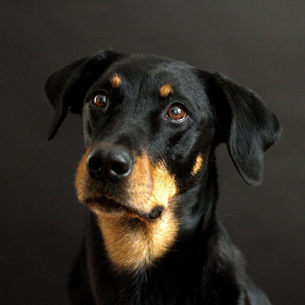 Hund, MiniMix 29cm/ 4,5kg (Mischling, Hündin, 1,5 Jahre
