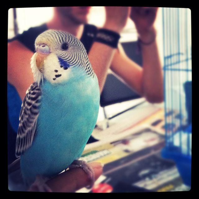 Meet Lulu :)