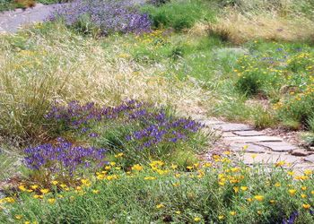 The Mary Wattis Brown Garden Of California Native Plants In Davis, CA.  Great Place
