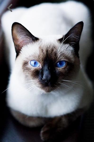 Construire Son Site Web Avec Les Options Par Contrat De Cats Beaux Chats Chats Et Chatons Et Photo Chat