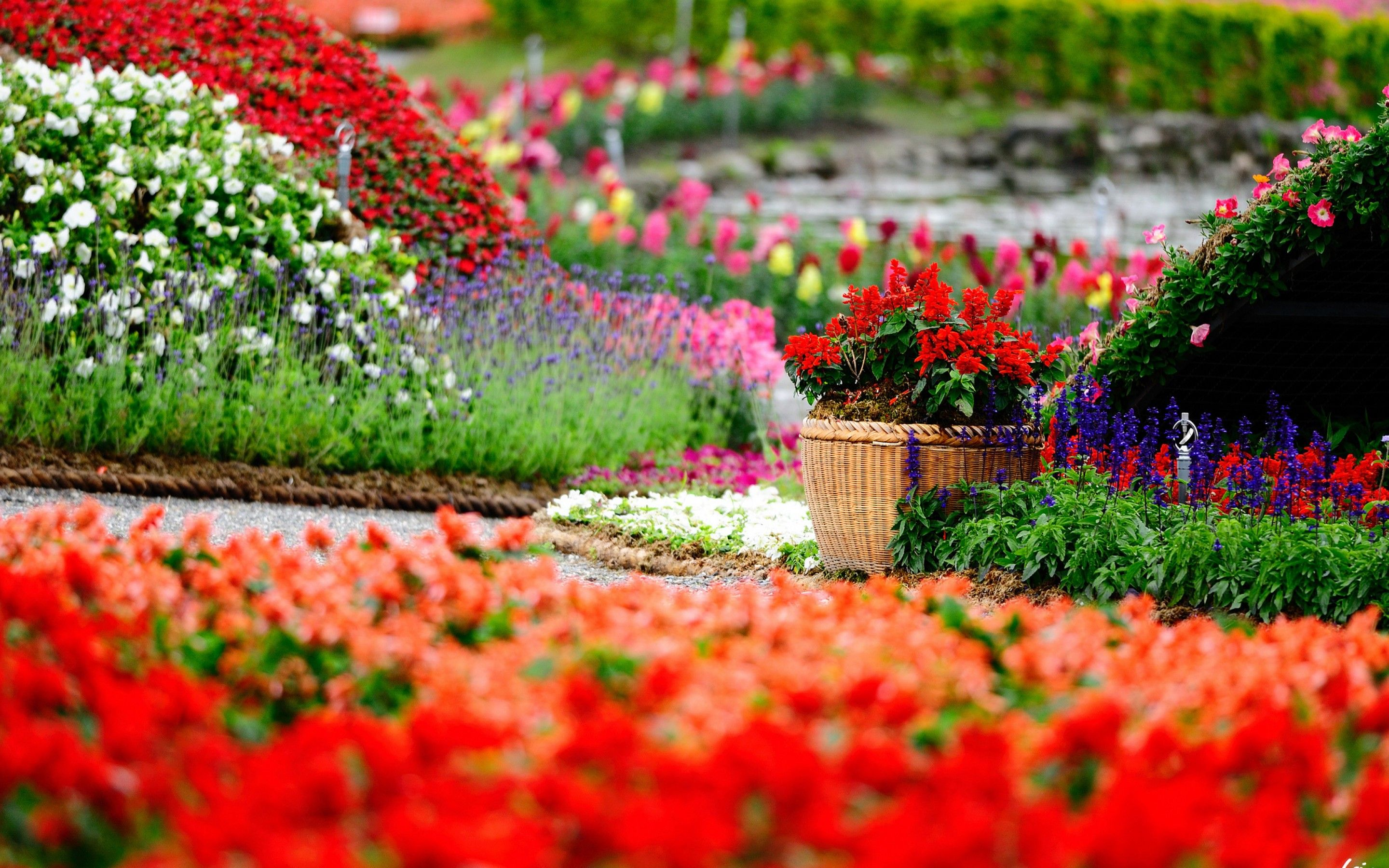 Lush Greenery Pictures Beautiful Gardens With Images Garden