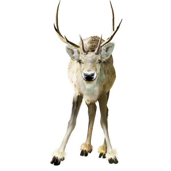 Яндекс.Фотки ❤ liked on Polyvore featuring christmas, animals, winter, deer and xmas