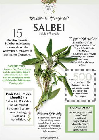 Infografiken Kräuter- & Pflanzenwelt - Download - #kleinekräutergärten