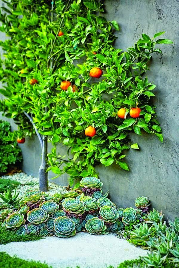 Information On Growing Berries Instructions Citrus Espalier Bed Of