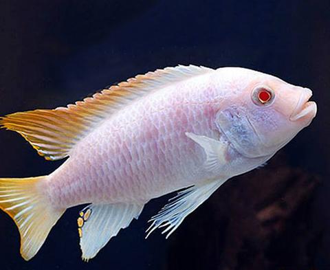 Buying Fish Online