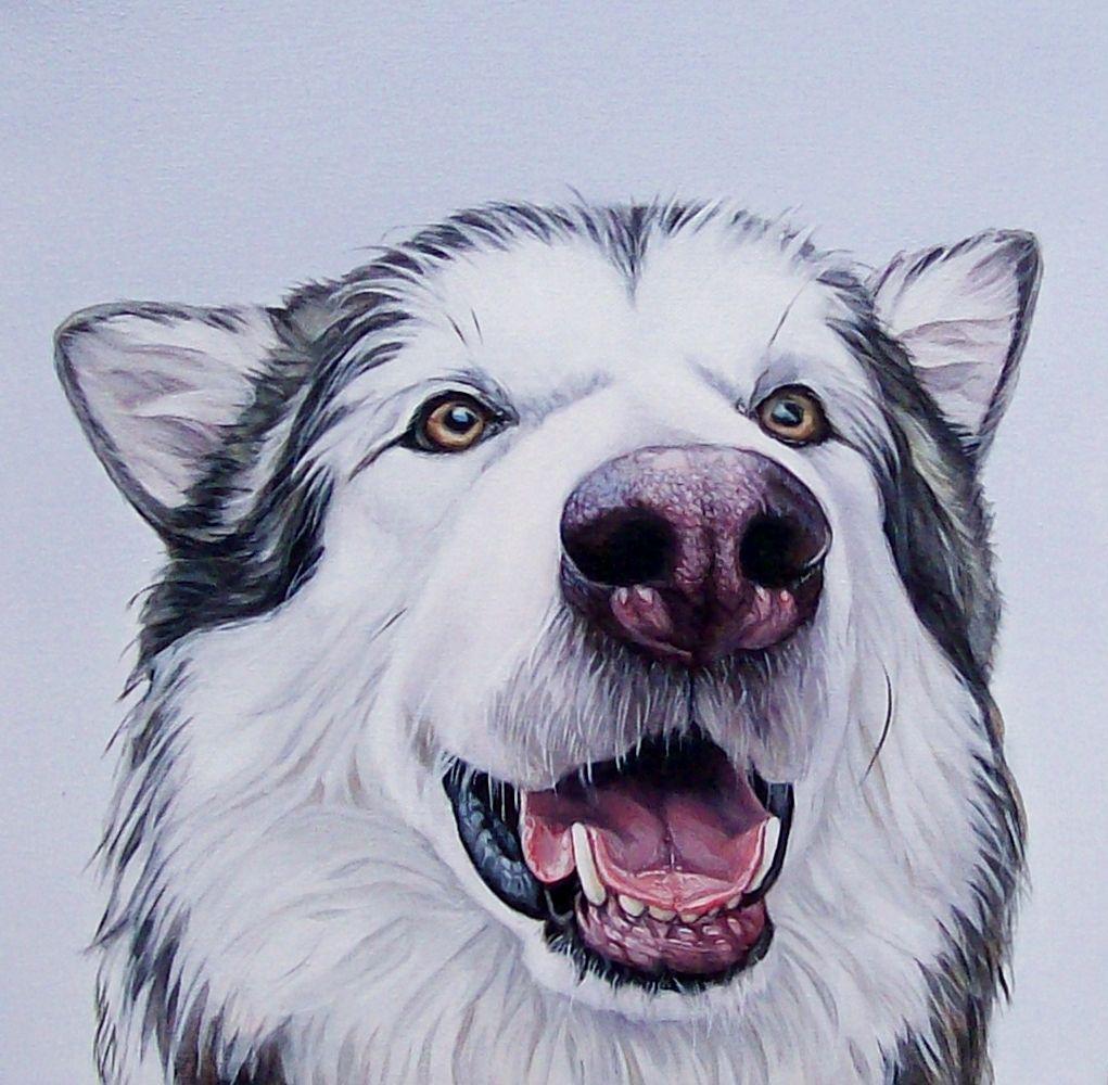 Ces magnifiques dessins de chiens ultra r alistes vont vous faire fondre dessins de chiens - Dessin de chein ...
