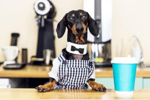 大阪 犬と行けるドッグカフェ人気おすすめ15選 おしゃれで可愛い店舗を紹介 Inunavi いぬなび 犬 いぬ 可愛い