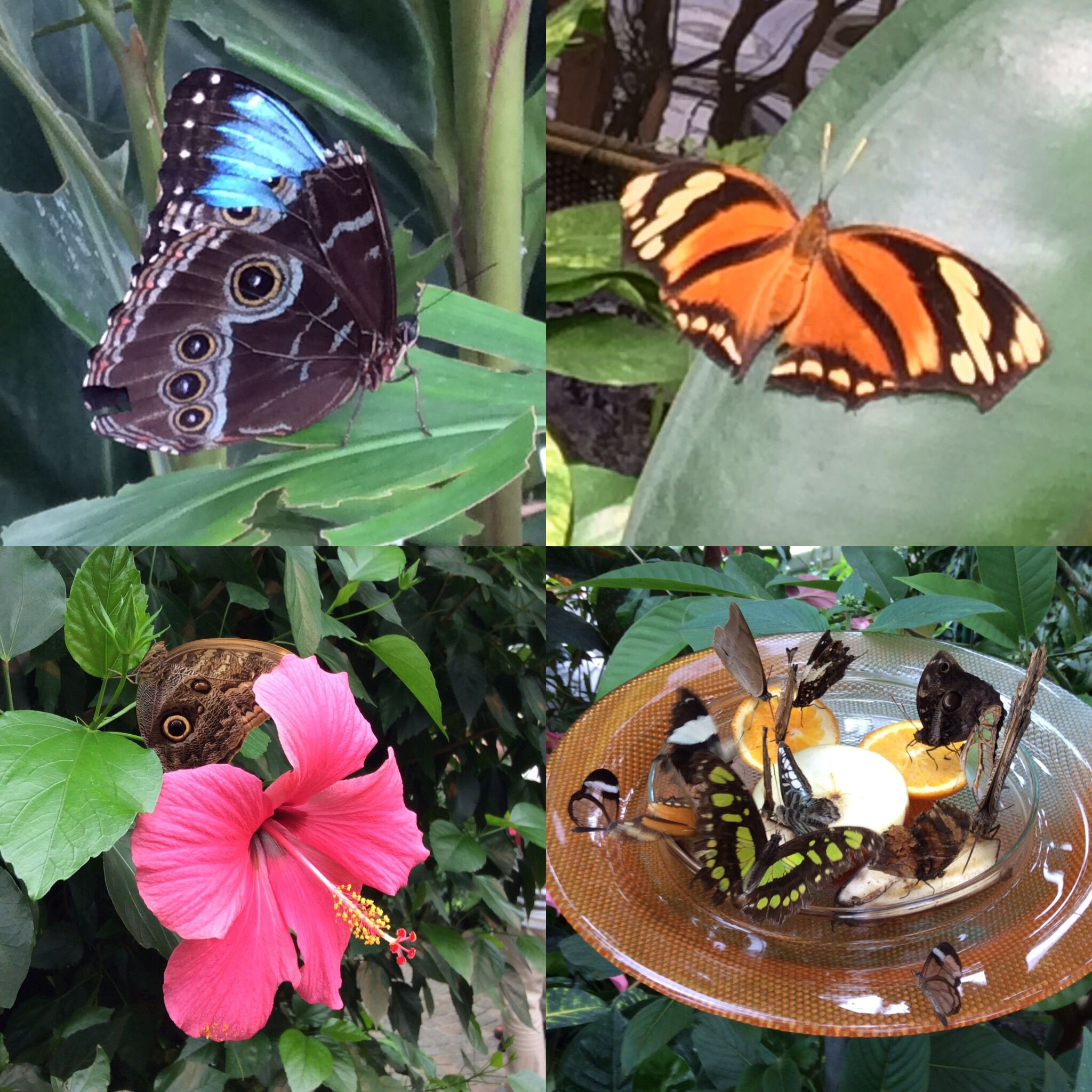 Butterflies taken at the Mainau Island Butterfly Centre on Lake Constance, Germany #Butterflies