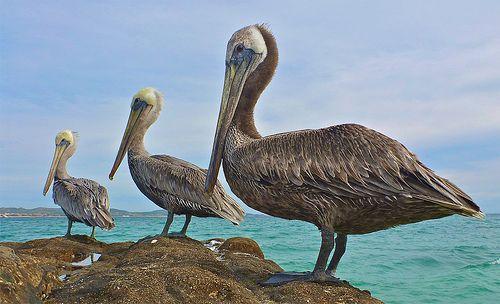 Tres Amigos | Flickr - Photo Sharing!
