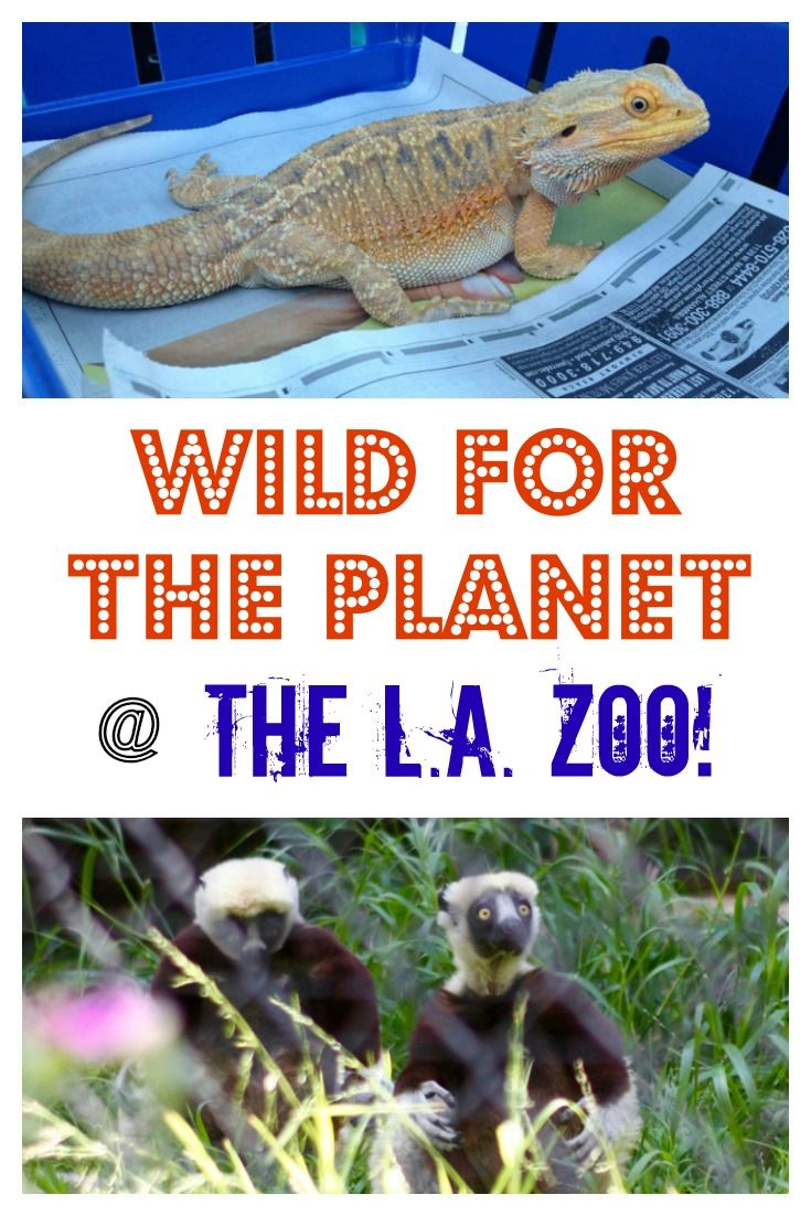 Is Your Child An Animal Enthusiast Then Take Them Explore Wild For The Planet At The Los Angeles Zoo And Botanica Family Adventure Travel Los Angeles Zoo Zoo
