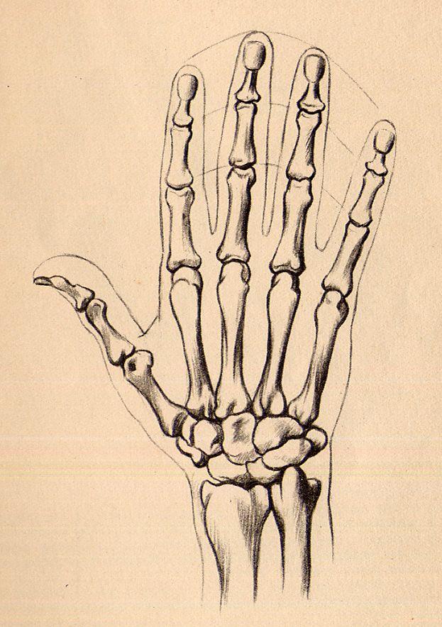 cmo dibujar las manos dibujo de manos dibujos de manos la mano