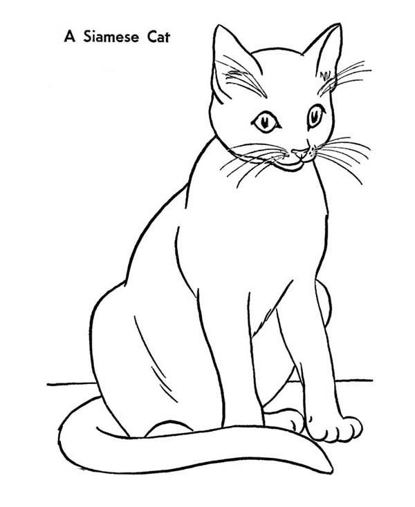 An Elegant Siamese Kitty Cat Coloring Page Kids Play Color Cat