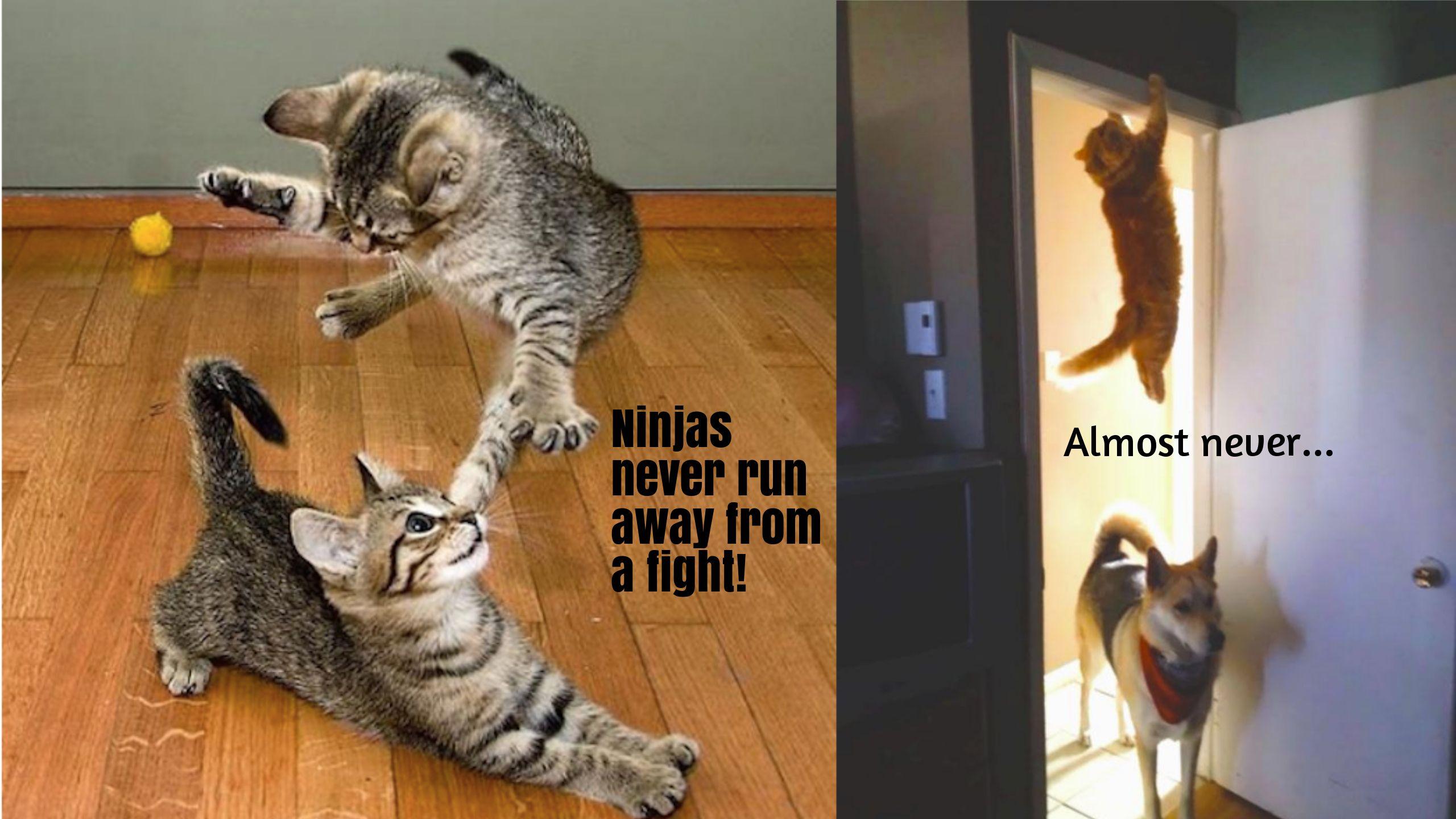 Https Www Youtube Com Watch V I9cdnc48qde Funny Cat Memes Funny Cats Cat Memes