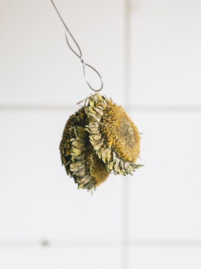 sonnenblumen f r die v gel sonnenblumenkerne b ffet und. Black Bedroom Furniture Sets. Home Design Ideas