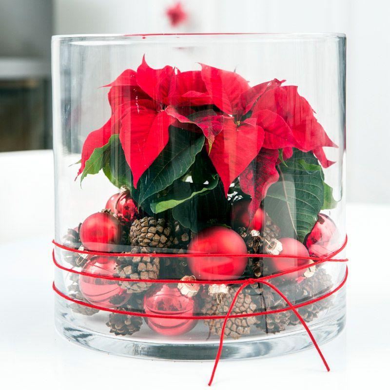 Deko mit Weihnachtssternen leicht gemacht #weihnachtsdekoglas