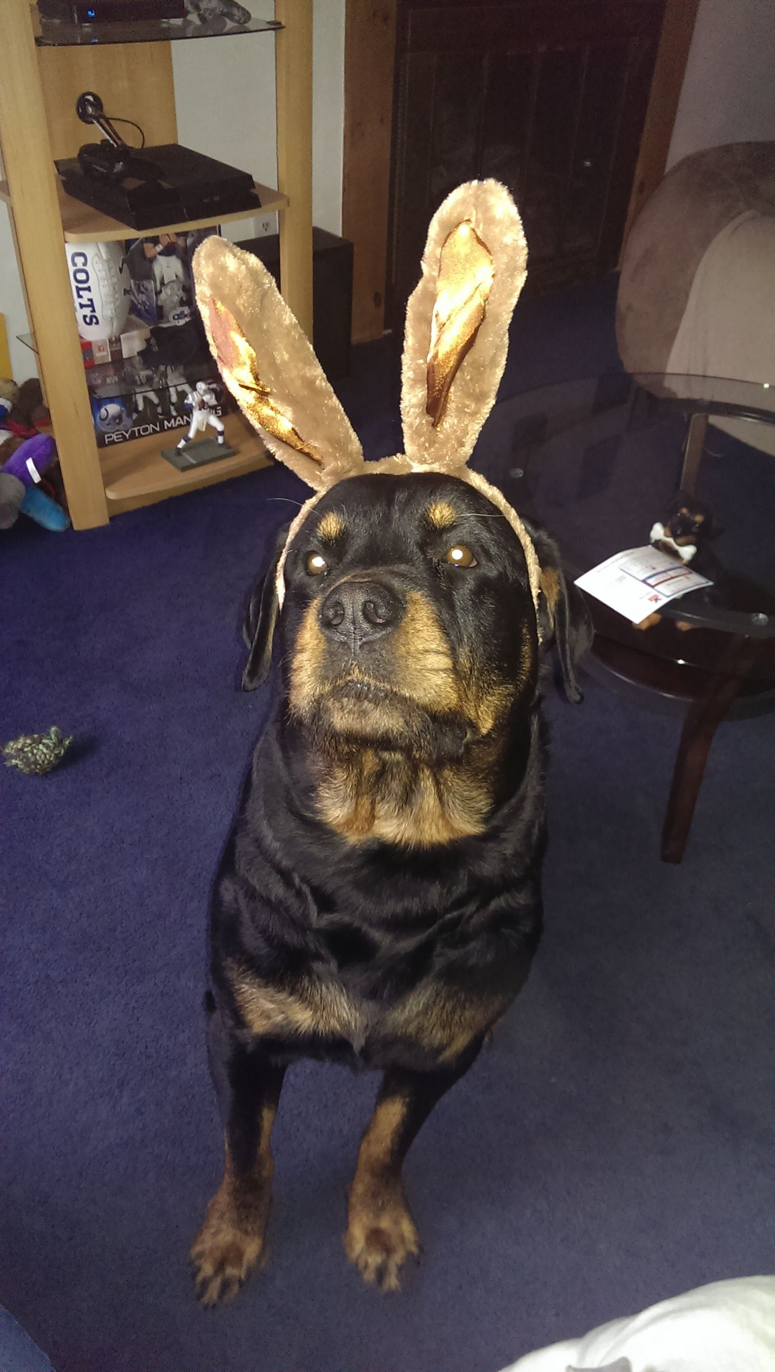 Rottie Easter Bunny