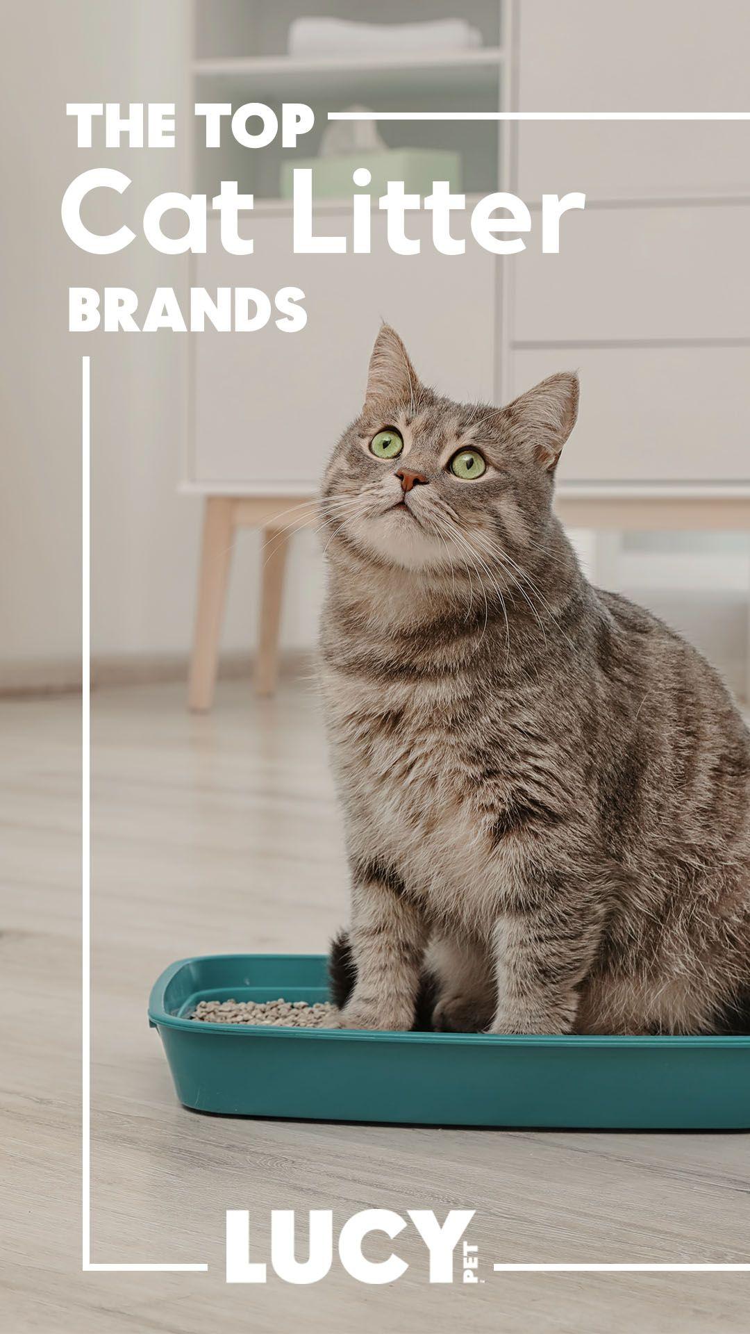 iPrimio Cat Litter Trapper EZ Clean Mat, Black, Jumbo