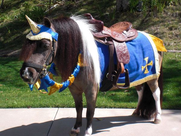 120 best images about Horse costumes on Pinterest   Safari ...   Mini Horse Costume