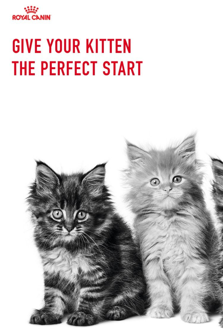 How Much To Feed A Kitten Cute Cats And Kittens Cute Cats Cute Baby Animals