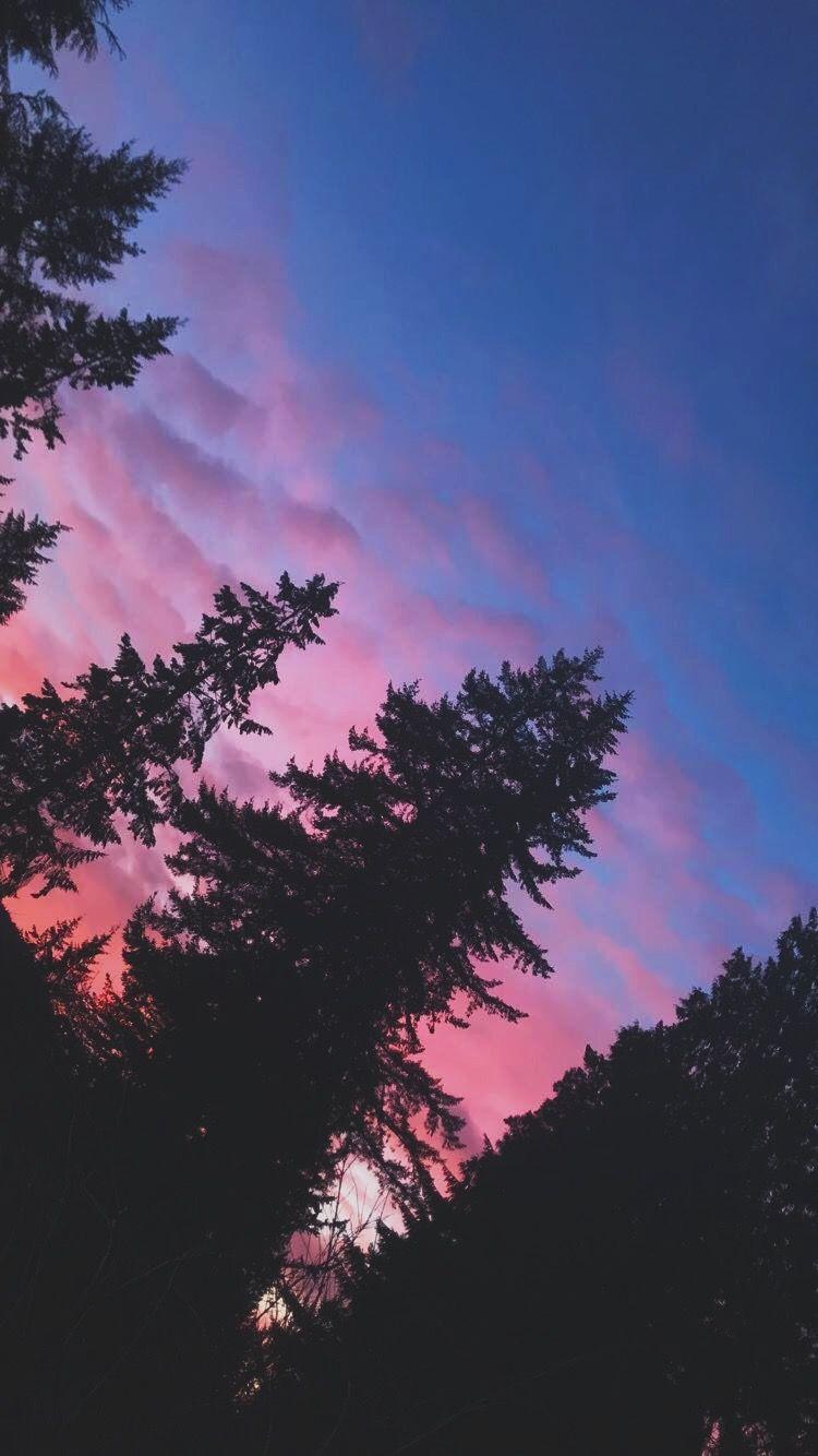 Sunset Margomontero Pink Sky Aesthetic Sun Clouds Blue Purple Trees Silhouette Sunset Clouds Sky Pink sky sunset sun trees nature