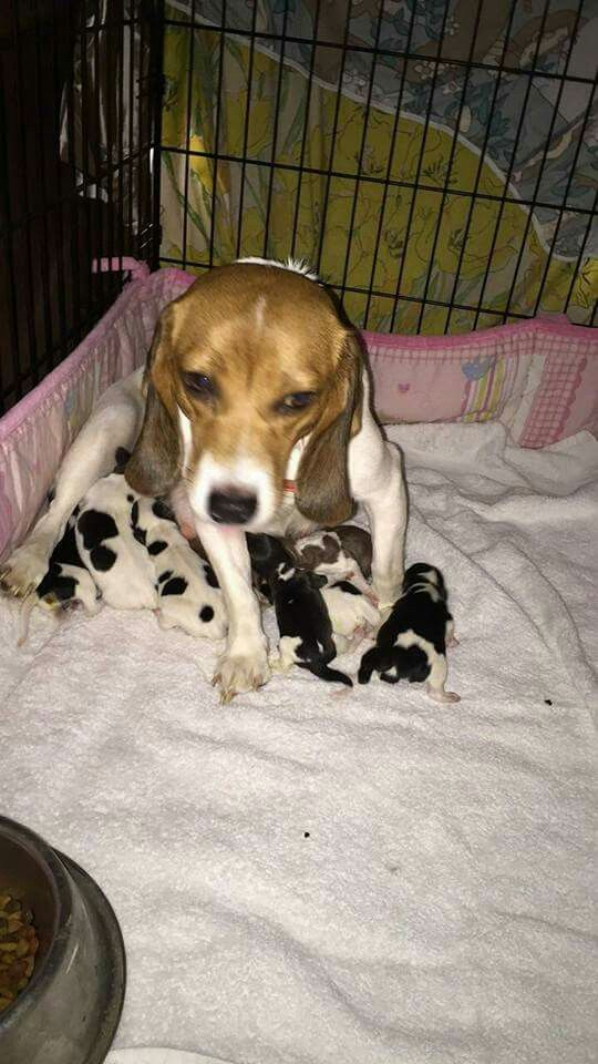 Ellie With Her Brand New Puppies Six Boys And Two Females Were