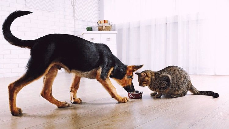 Dog Training Part 1 Natural Raw Food Diet For Dogs Cats Cat