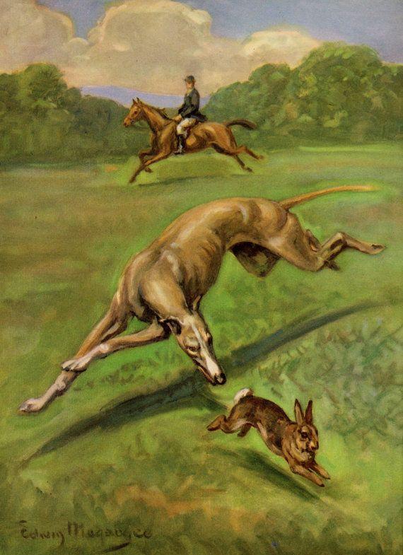 Vintage Greyhound Dog Print Beautiful Greyhound Art Cottage Art 1950s Gallery Wall Art Home Library Decor 2365 Greyhound Art Dog Illustration Grey Hound Dog
