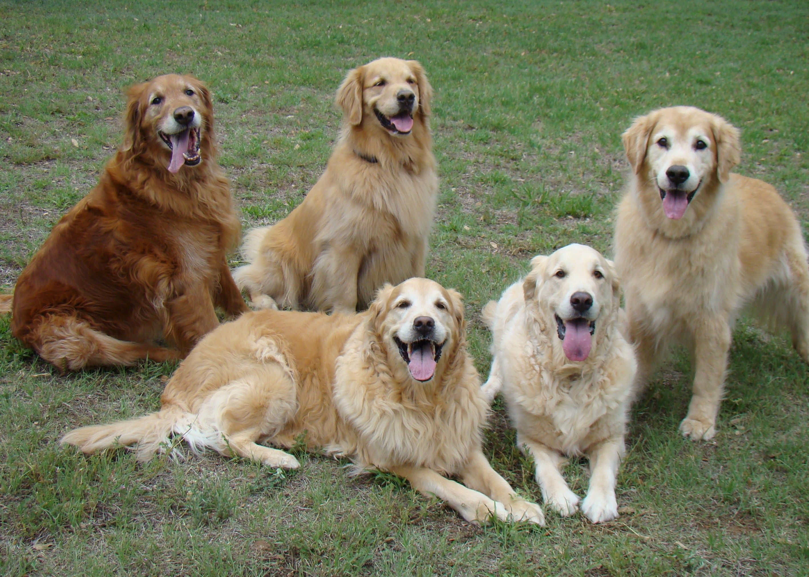 Posing With Our Golden Pals From South Dakota Dogs Golden