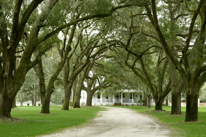 WOODSIDE PLANTATION HAMPTON COUNTY, SOUTH CAROLINA HISTORIC PLANTATION 967 ACRES ESTABLISHED IN 1870.