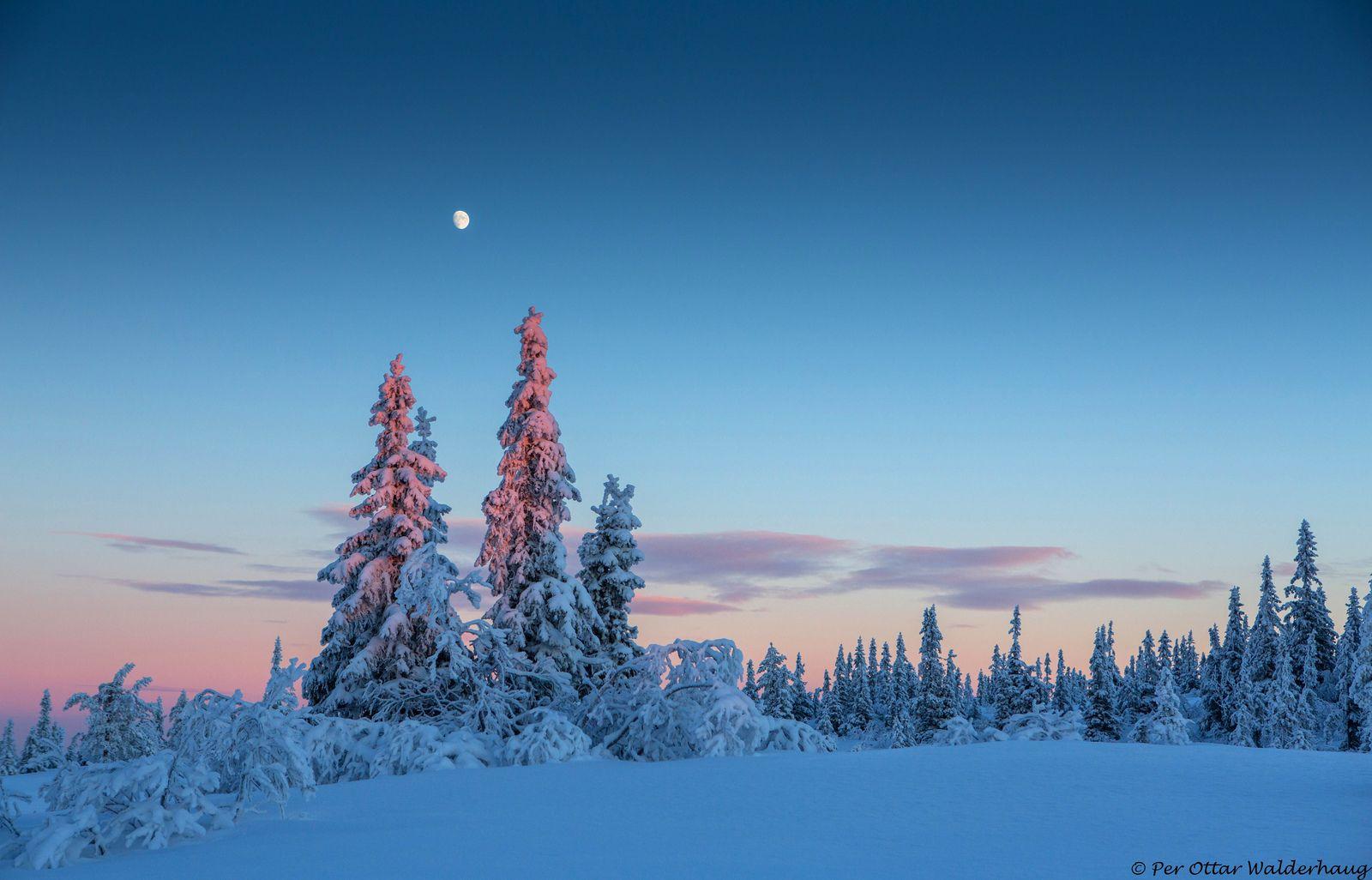 Winter Wonderland :)   by Pewald