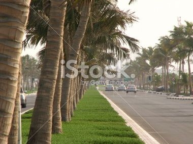 Palm trees on the street Royalty Free Stock Photo