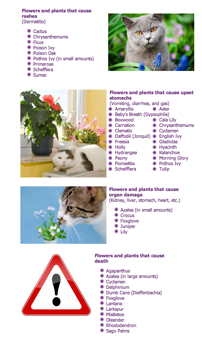 When in doubt avoid altogether plants flowers poisonous to pets plants flowers poisonous to pets cats izmirmasajfo Choice Image