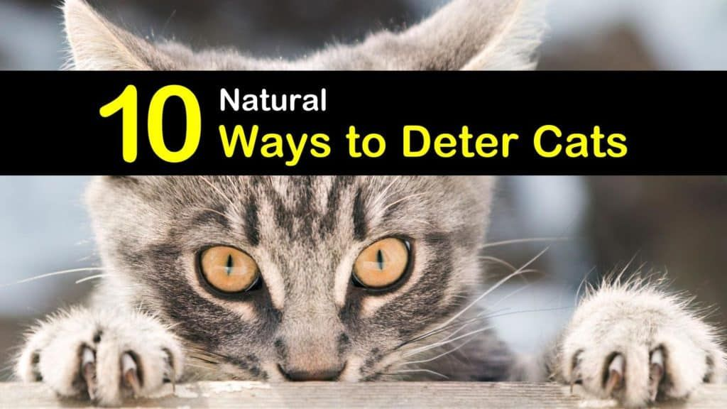 10 Natural Ways to Deter Cats and Keep Them Away Feral