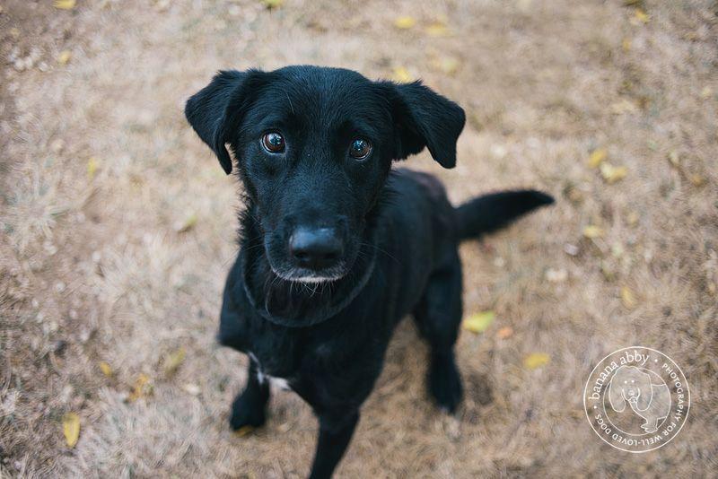 Photography For Well Loved Dogs Italian Greyhound Corgi Lab Mix Greyhound