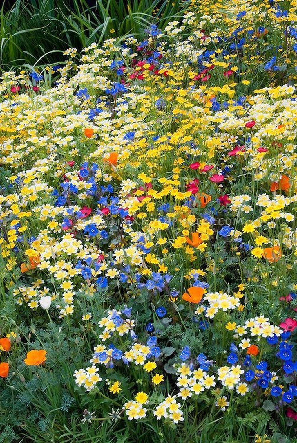 Beautiful wild flower garden #wildflowers