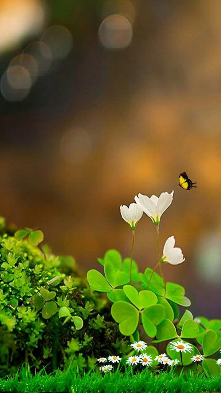Pin On מסגרות פרחים