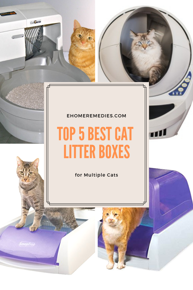5 Best Cat Litter Boxes For Multiple Cats In 2020 Cat Litter Box Best Cat Litter Litter Box