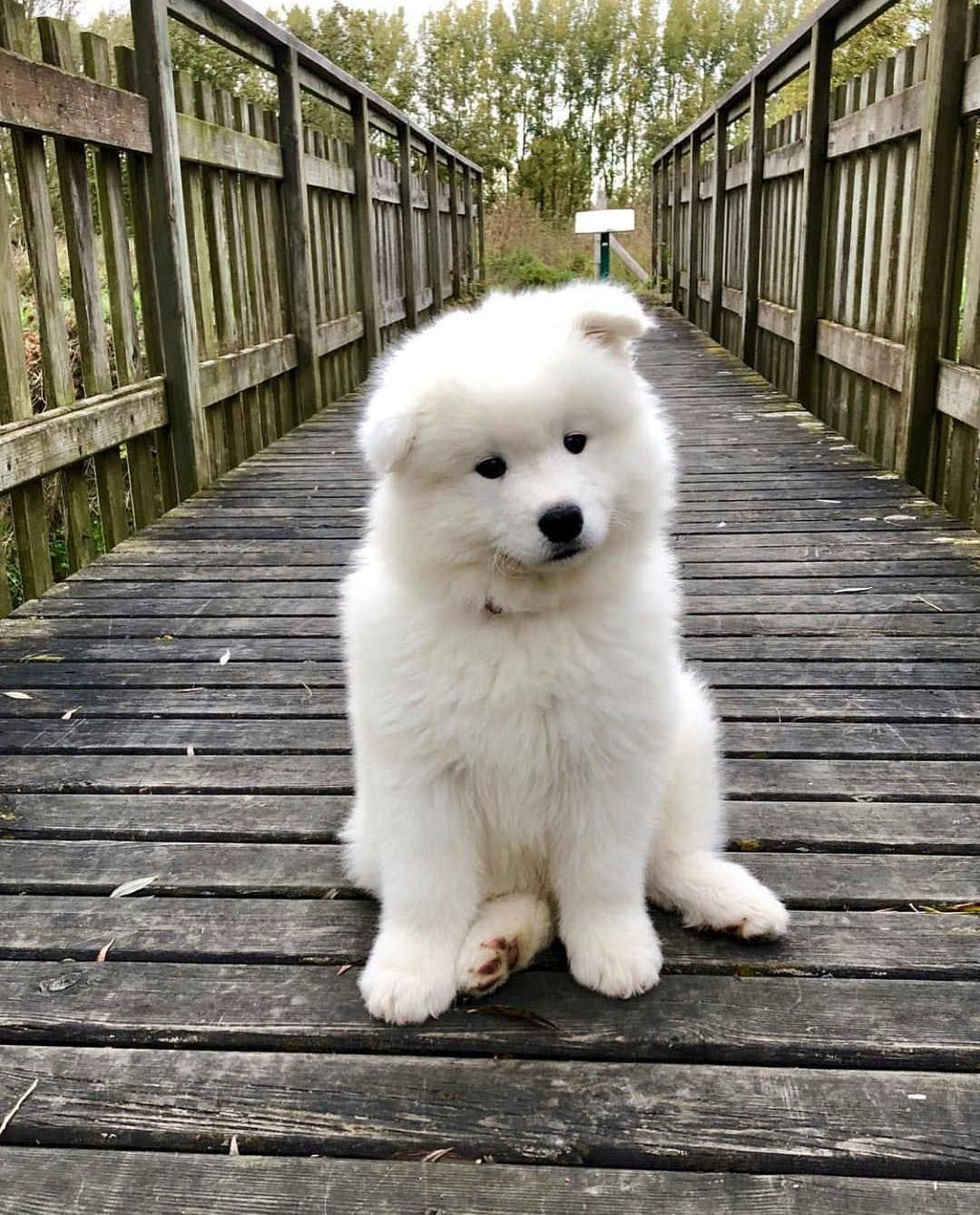 Photo of 11 Big Fluffy Dog Breeds Perfect To Cuddle With – DOGBEAST