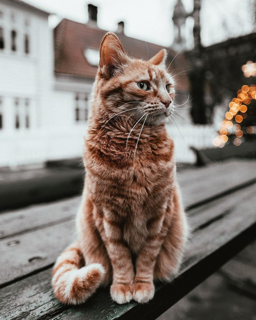 Wonderful Pictures Tabby cat, Tabby cat pictures, Cute