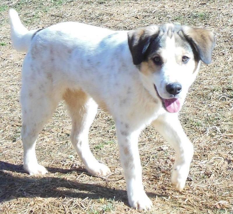 Adopt Mason On Beagle Mix White Dogs Dogs