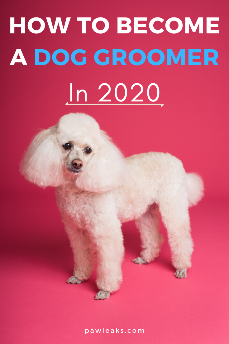 How to Become a Dog Groomer in 2020 | PawLeaks in 2020 | Dog names, Dog  groomers, Dog grooming