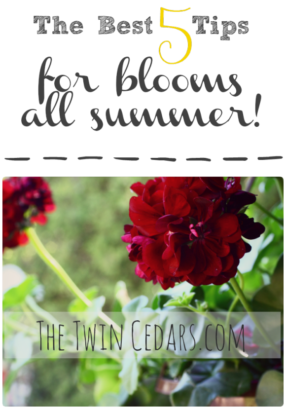 The Gardener's Secret to Blooms all Summer :: The Twin Cedars